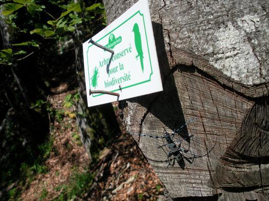 """Zoom sur un panneau """"Arbre conservé pour la biodiversité"""""""