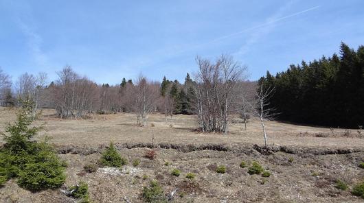 Forêt de Guebwiller