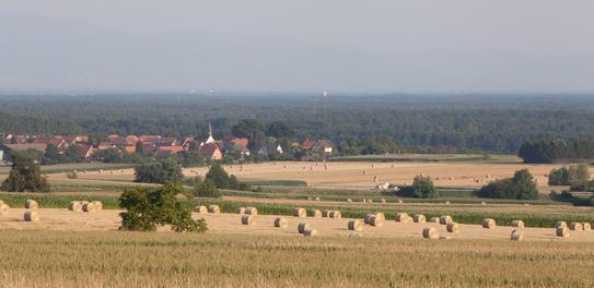 Vue de la forêt de Haguenau depuis la campagne voisine