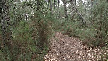 Un sentier en forêt