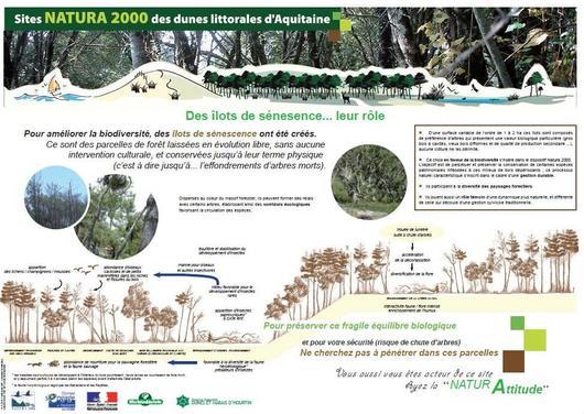 Un panneau qui informe sur l'intérêt des îlots de vieux bois