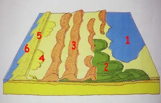 Ce schéma présente une vue aérienne du massif dunaire. On y voit bien la succession de reliefs et les différents types de dunes