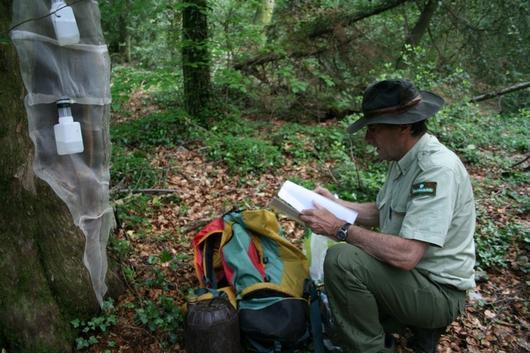 Un forestier fait le recenssement des insectes spécifiques aux vieux peuplements