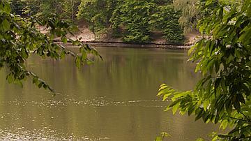 Un bord d'étang en forêt