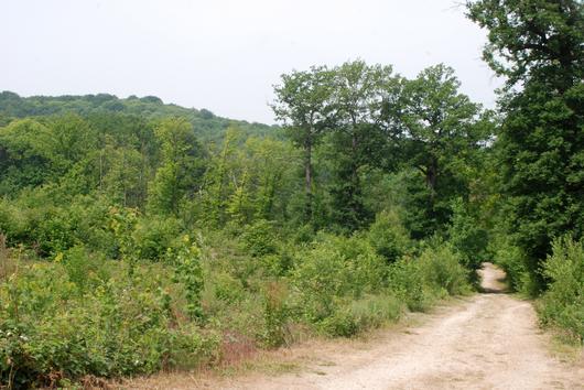 A gauche du chemin, cette parcelle forestière touchée par la tempête de 1999 abrite de jeunes chênes qui ont pris la relève de leurs aînés. Un peu plus loin, les promeneurs entreront dans une forêt plus dense qui correspond à un autre stade du cyle de vie de la forêt