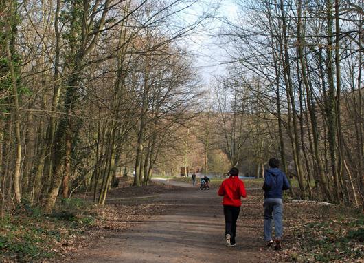 Des promeneurs en forêt