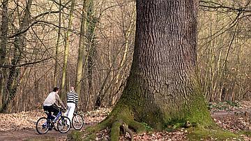 Des cyclistes à vélo devant un arbre impressionnant
