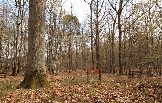 En forêt de Montargis