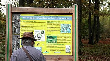 Un panneau pédagogique en forêt sur les ilôts de vieux bois
