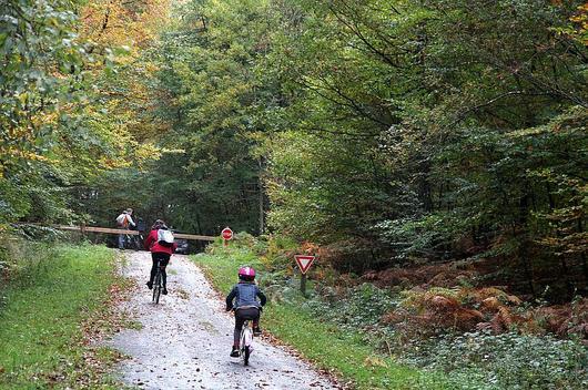 Des cyclistes en forêt