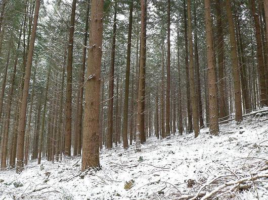 En forêt de Saverne