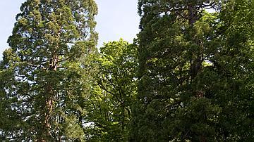 Des arbres majestueux permettent de repérer certains des ronds de la forêt