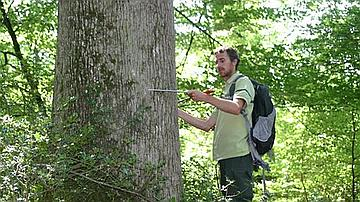 La sylvicultre vise à obtenir des gros chênes à grain fin