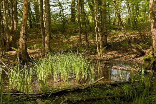 Les milieux humides contribuent à la riche biodiversité de la forêt