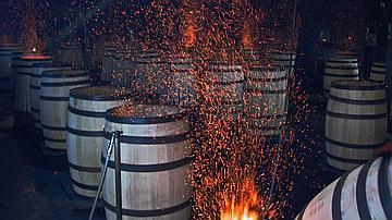 Le chêne de Tronçais transmet ses qualités au vin