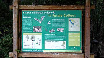 La futaie Colbert constitue un écosystème rare