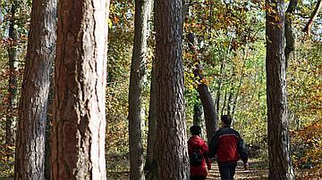 Des sentiers sont tracés à travers toute la forêt