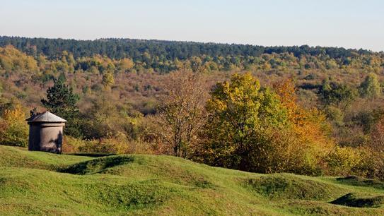 Une vue de la forêt