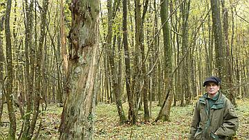 Un arbre relique qui a survécu aux combats et est aussi précieux pour la biodiversité