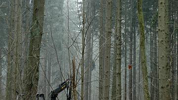Les engins forestiers - ici une abatteuse - restent sur les cloisonnements créés pour préserver le sol de la forêt
