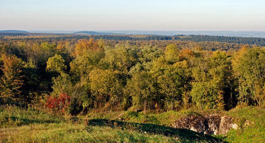 Point de vue sur la forêt avec un vaste horizon