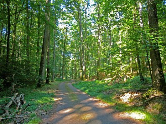 L'Hermitière, en forêt de Bercé
