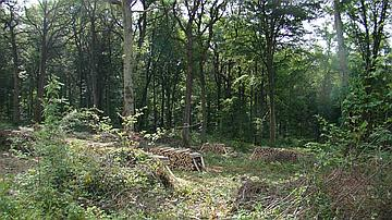 Exploitation en forêt domaniale de Hautvillers