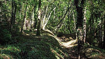 Au coeur de la forêt de Verdun