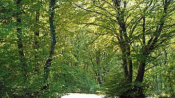 Les peuplements forestiers de Verdun