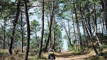 L'accueil des vélos en forêts d'Aquitaine