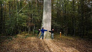 En forêt domaniale de Tronçais, Allier