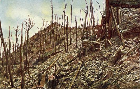 Phot de la forêt ravagée par la guerre : arbres morts et calcinés