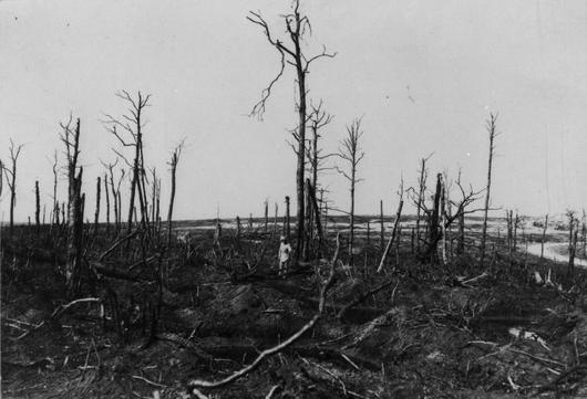 Photo d'arbres mitraillés