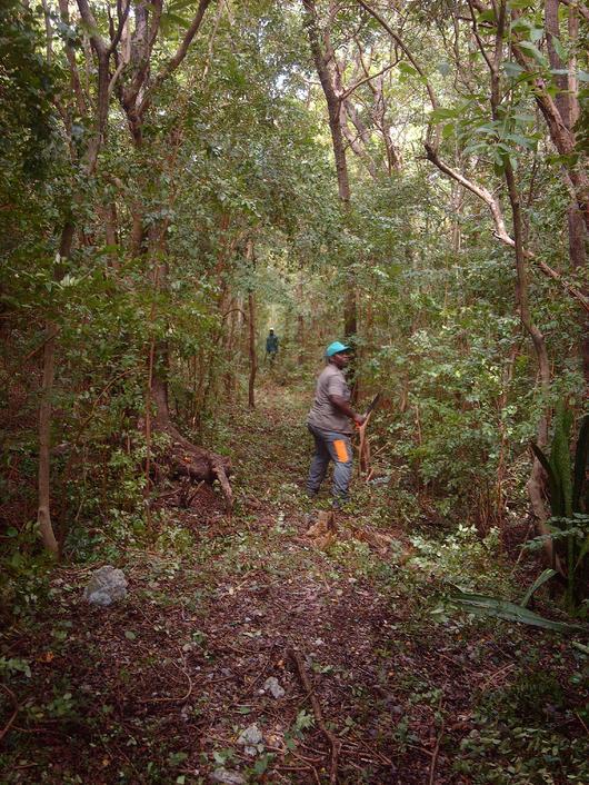 Ces forêts réparties sur l'ensemble du territoire ont une grande valeur à la fois patrimoniale et paysagère