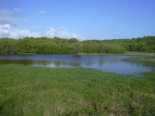 La forêt humide littorale, souvent appelée la mangrove,  abrite diverses espèces animales et leur sert de nurserie