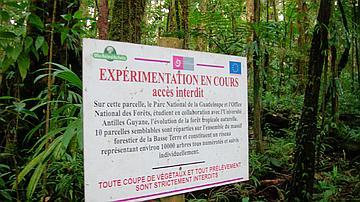 Placette en forêt dense humide