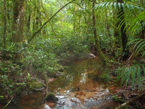 Les forêts de bas-fond, de part leurs spécificités, font aussi l'objet d'inventaires botaniques et pédologiques