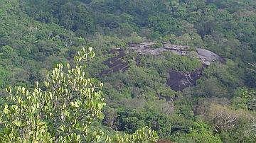 Vue sur la forêt du haut du Piton Armontabo