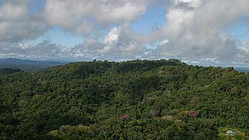 Vue aérienne sur la réserve du Mont-Grand-Matoury