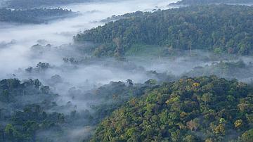 Vue aérienne d'une partie de la réserve des Nouragues
