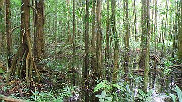 Les forêts immergées présentent un écosystème spécficique