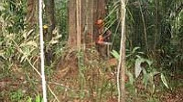Un bûcheron en train de couper un arbre