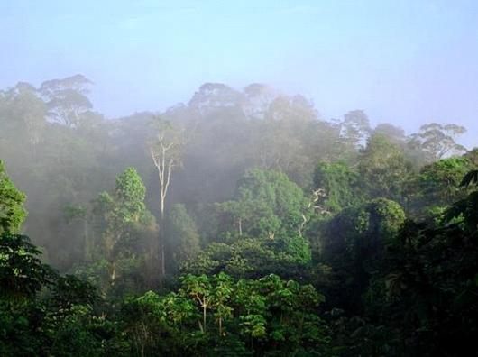 différents étages de végétation de la forêt