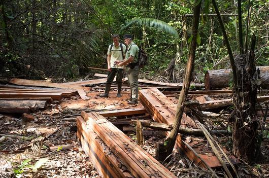 Deux agents contrôlent une exploitation illégale de coupe de bois.