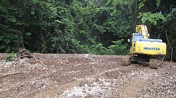 Remise en état de la forêt marécageuse