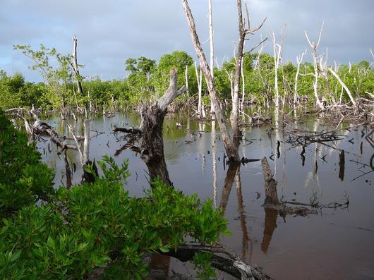 Les conditions extrêmes de salinité et de carences en éléments nutritifs favorisent la formation d'étangs bois sec