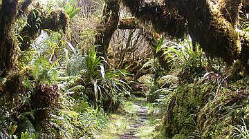 Ce sentier parcourt la réserve biologique de Bébour