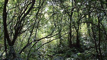 Quiétude d'un sous-bois littoral de basse altitude (forêt de Bois Blanc)
