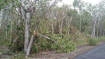De nombreuses chutes d'arbres en forêt de l'Etang Salé lors du passage du cyclone Béjisa