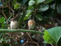 Promeneurs, vos balades seront souvent rythmées par le chant de ces deux oiseaux